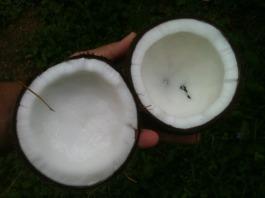 coconut-648105_1280