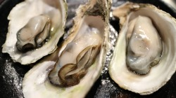 oyster-989182_1920