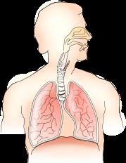 anatomy-145696